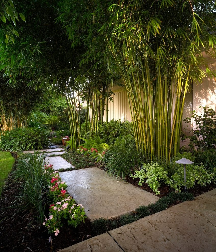 Bamboo Plant Landscape Tropical With Path Lighting Tropical Outdoor Intended For Most Popular Tropical Outdoor Hanging Lights (View 16 of 20)