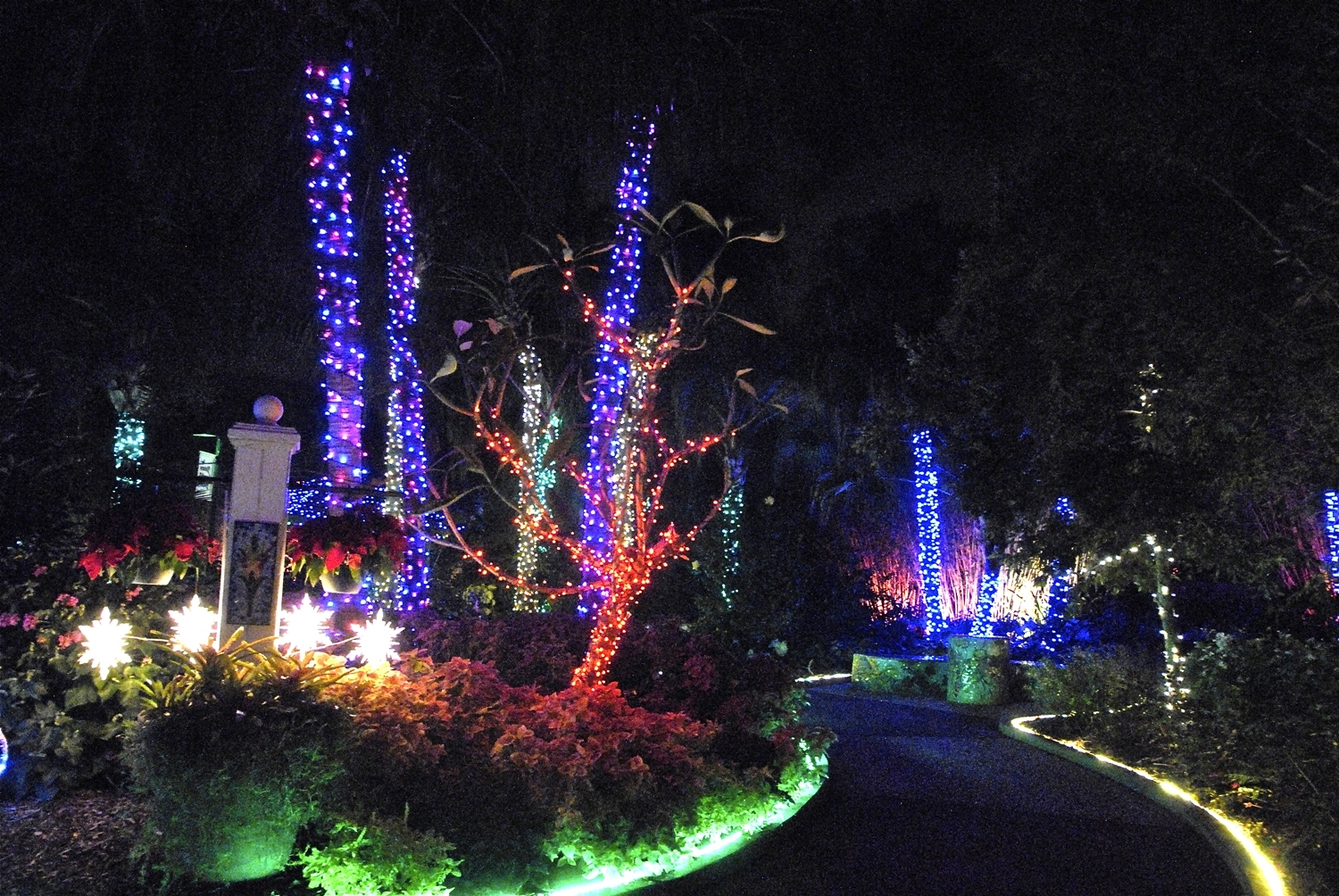 Botanical Garden Lights Throughout Trendy Pinellas County, Florida Communications Photo Library (View 7 of 20)