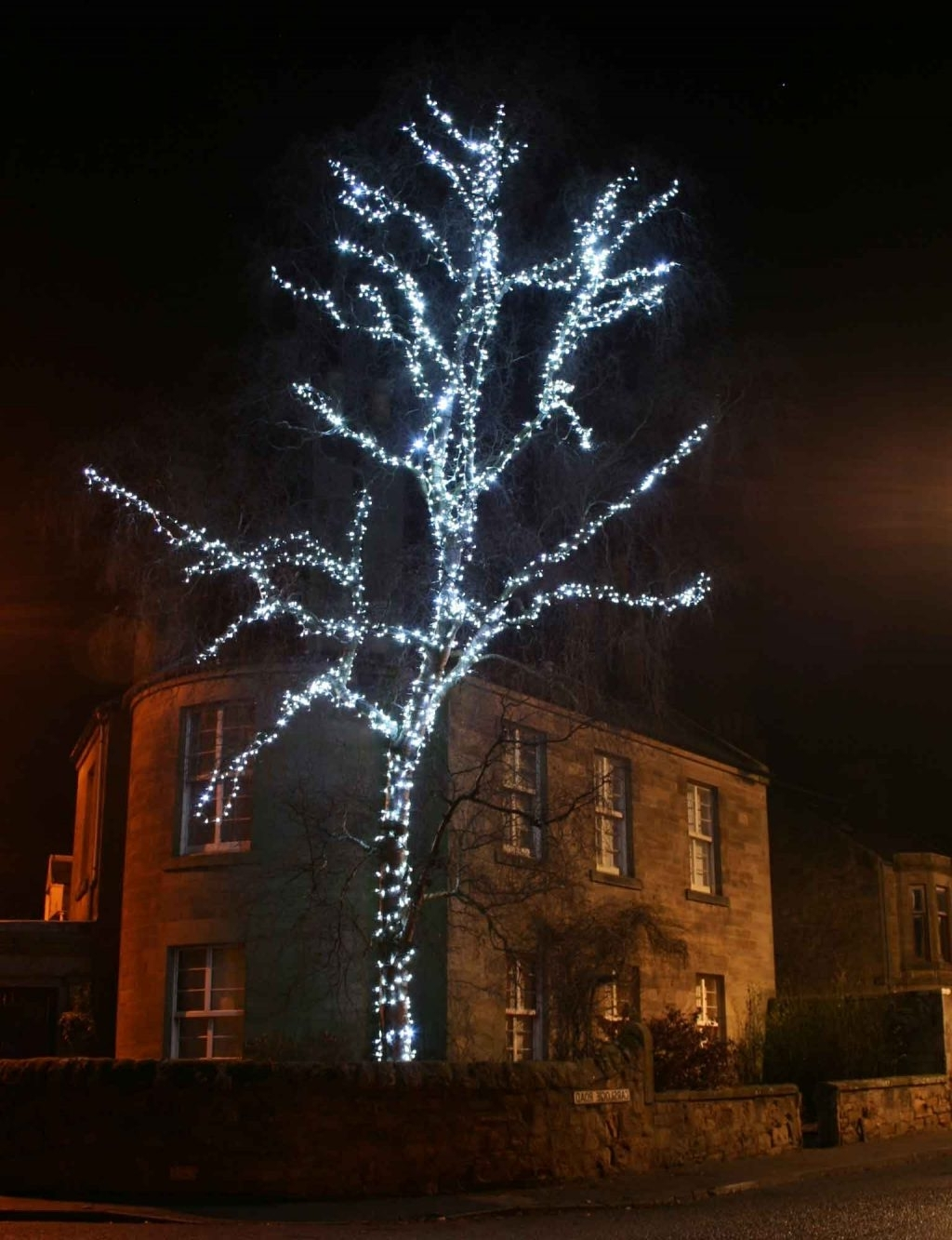 Current Hanging Lights In Outdoor Trees Intended For 42+ Fantastic Outdoor Hanging Tree (View 16 of 20)