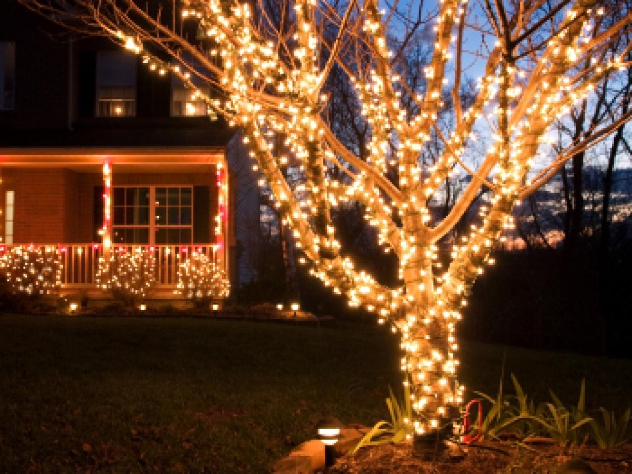 Diy For Hanging Lights On An Outdoor Tree (Gallery 6 of 20)