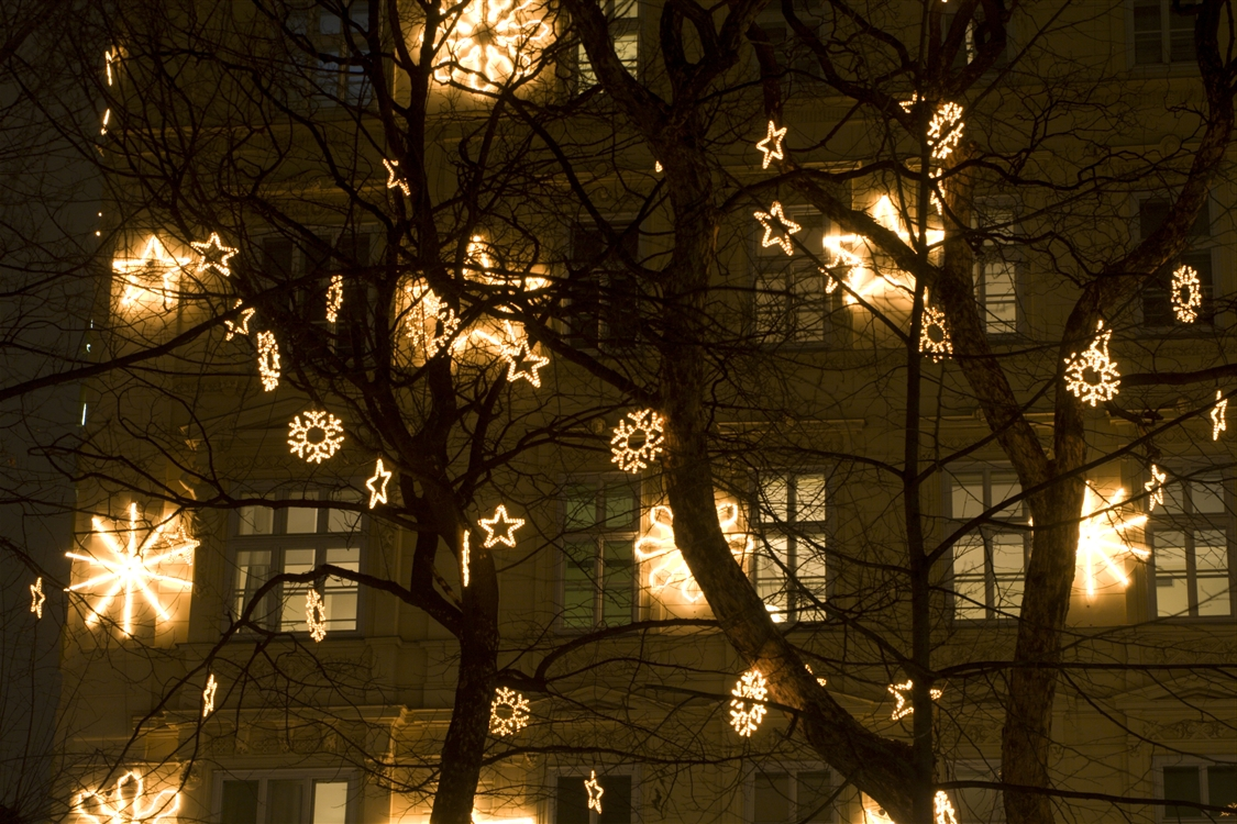 Featured Photo of Hanging Lights in Outdoor Trees