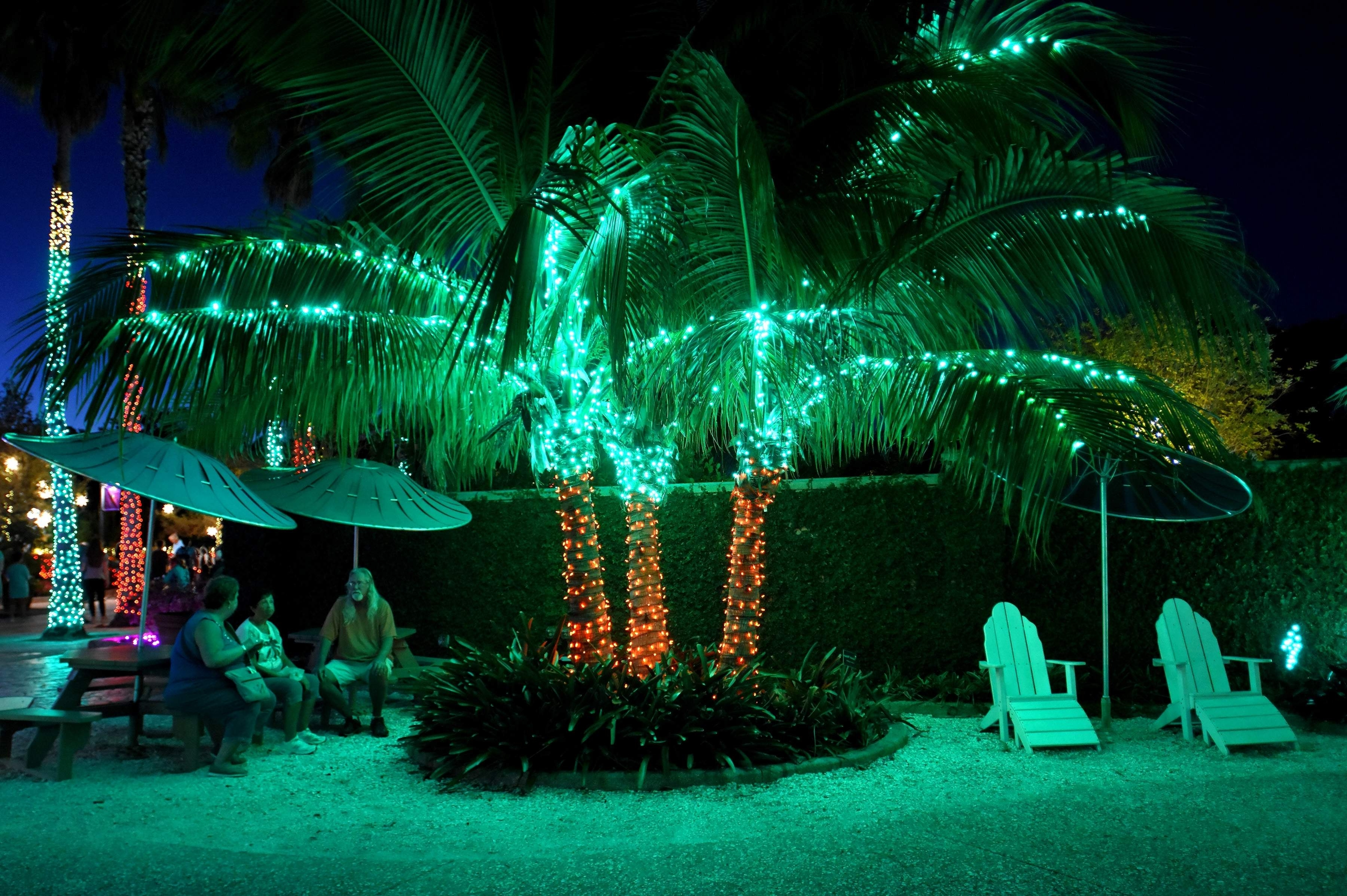 Famous Hundreds Of Thousands Of Lights On Display At Florida Botanical Within Botanical Garden Lights (View 10 of 20)