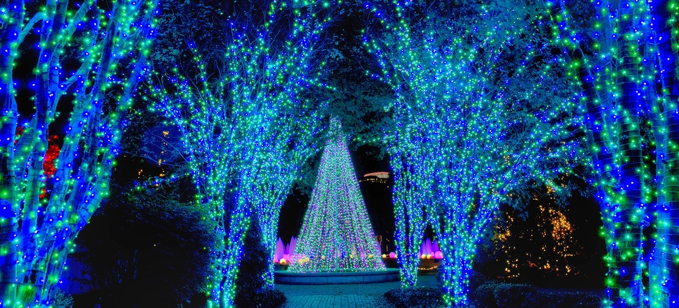 Featured Photo of Botanical Garden Lights