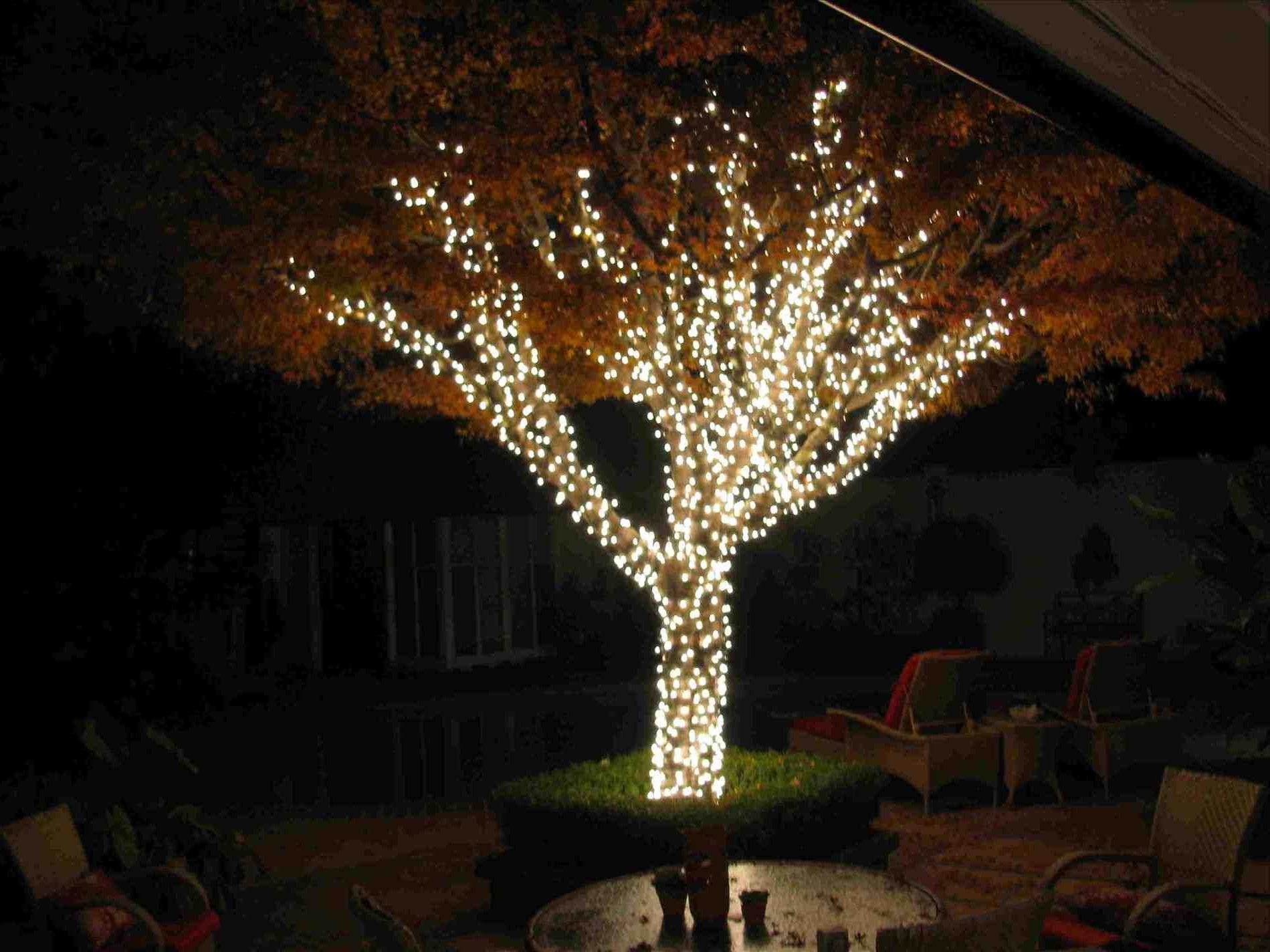 Hanging Lights On An Outdoor Tree Intended For Well Liked Backyard Tree Lighting Ideas – Homedesignlatest (View 11 of 20)