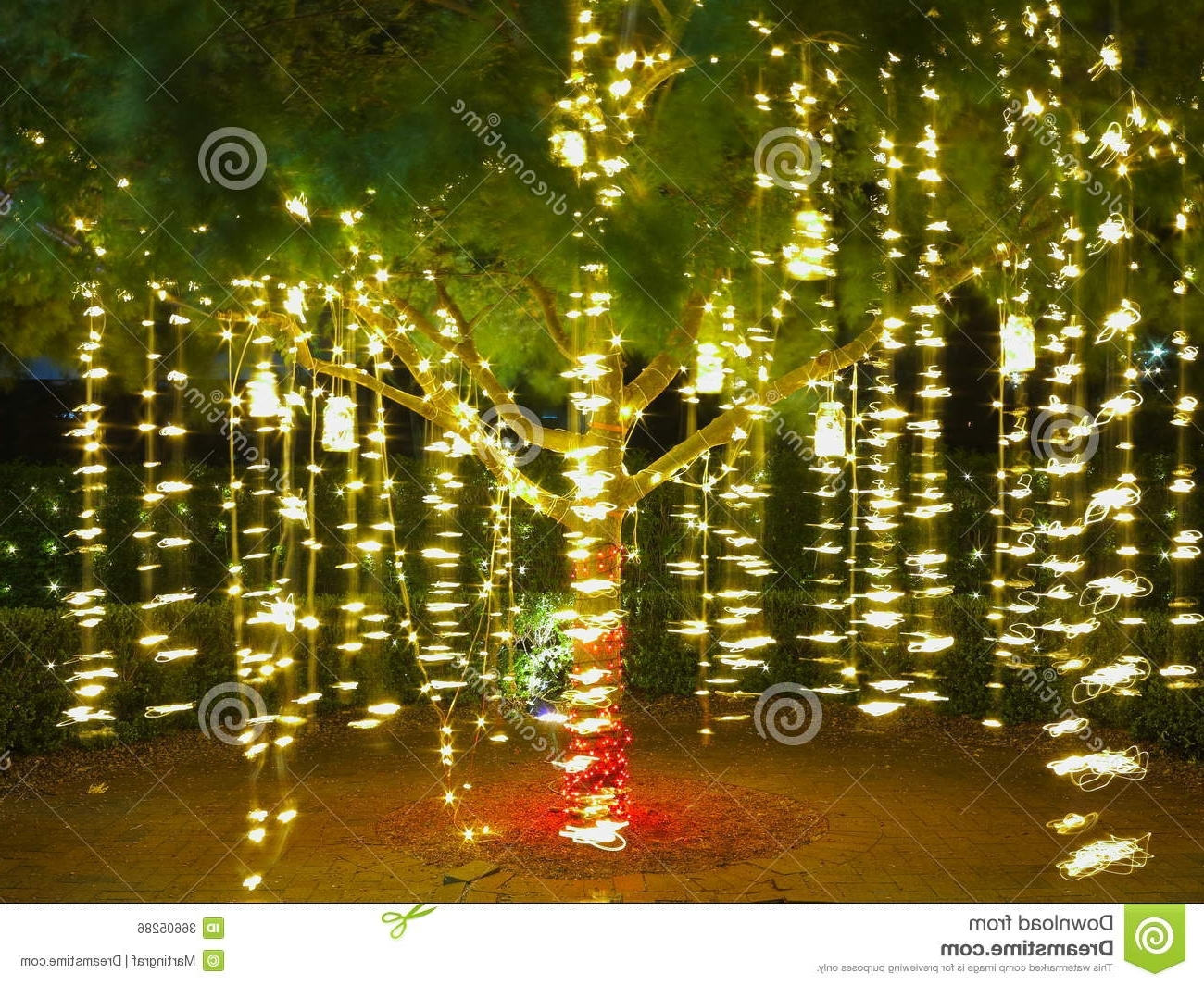 Holiday Lights In Tree / Summer Night Stock Photo – Image Of Festive Regarding Most Recent Hanging Outdoor Christmas Lights In Trees (View 13 of 20)