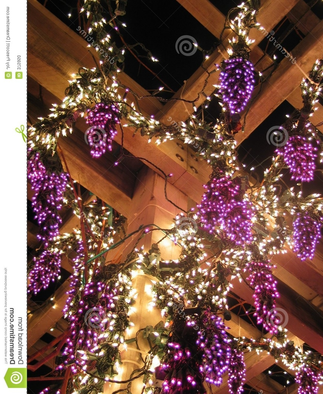 Latest Outdoor Hanging Grape Lights Within Grape Vine Lights Stock Photo (View 6 of 20)