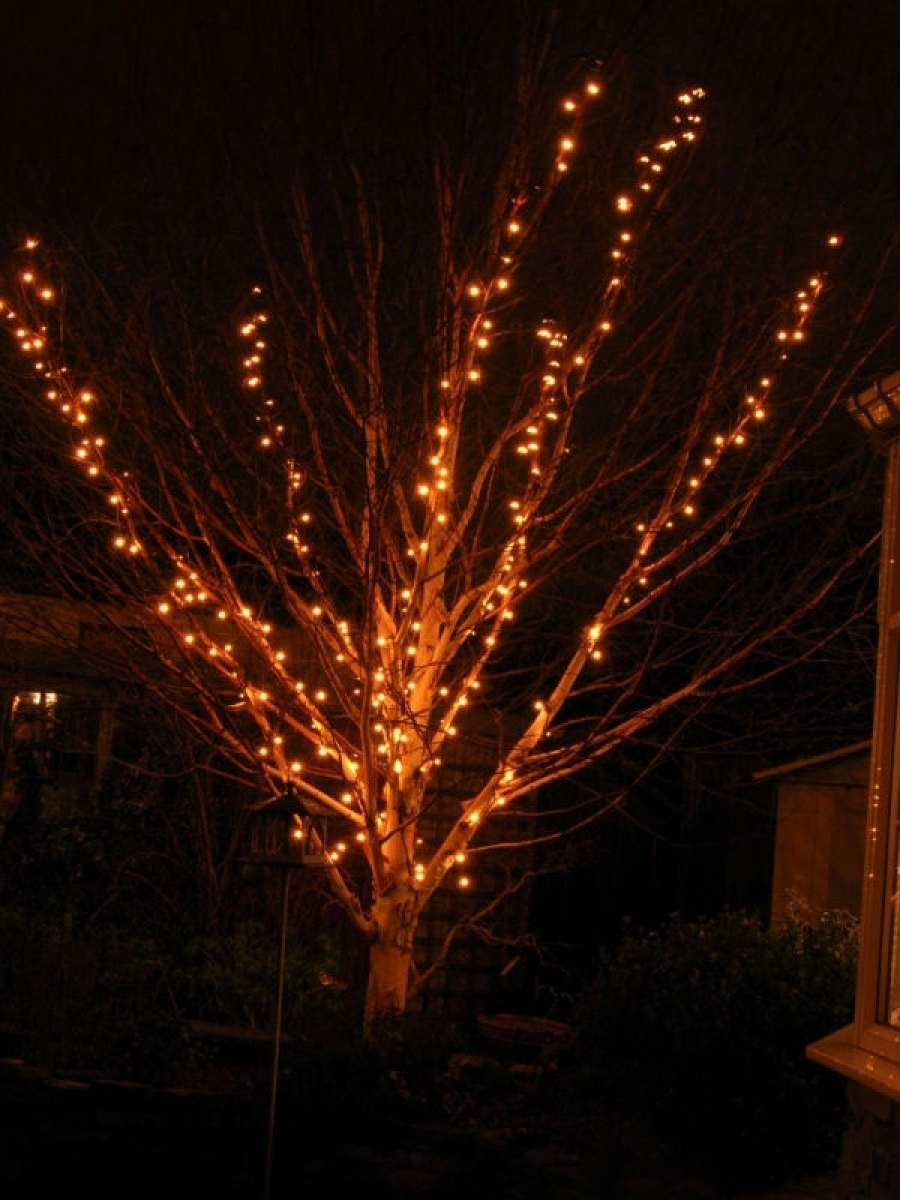 Most Current Decoration Ideas Gorgeous Branches Christmas Tree And Small Lights With Regard To Hanging Outdoor Christmas Lights In Trees (View 17 of 20)