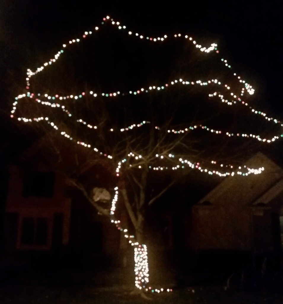 Featured Photo of Hanging Lights On Large Outdoor Tree