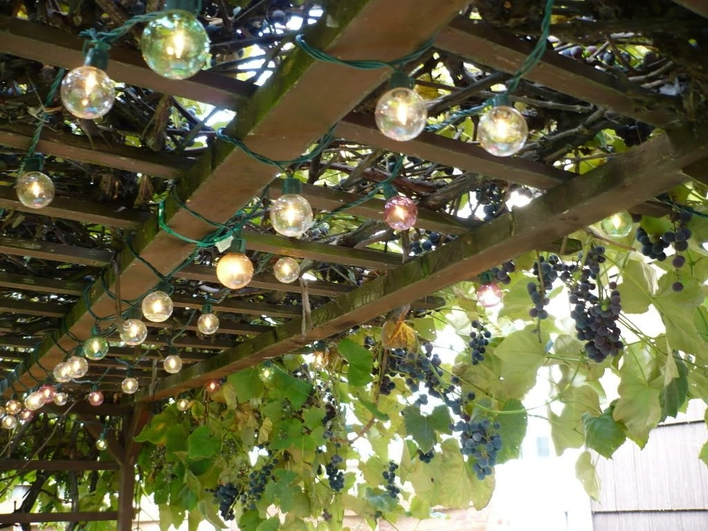Outdoor Hanging Grape Lights For Most Popular My Uncle Had A Grape Vine Trellis In His Yard (View 12 of 20)