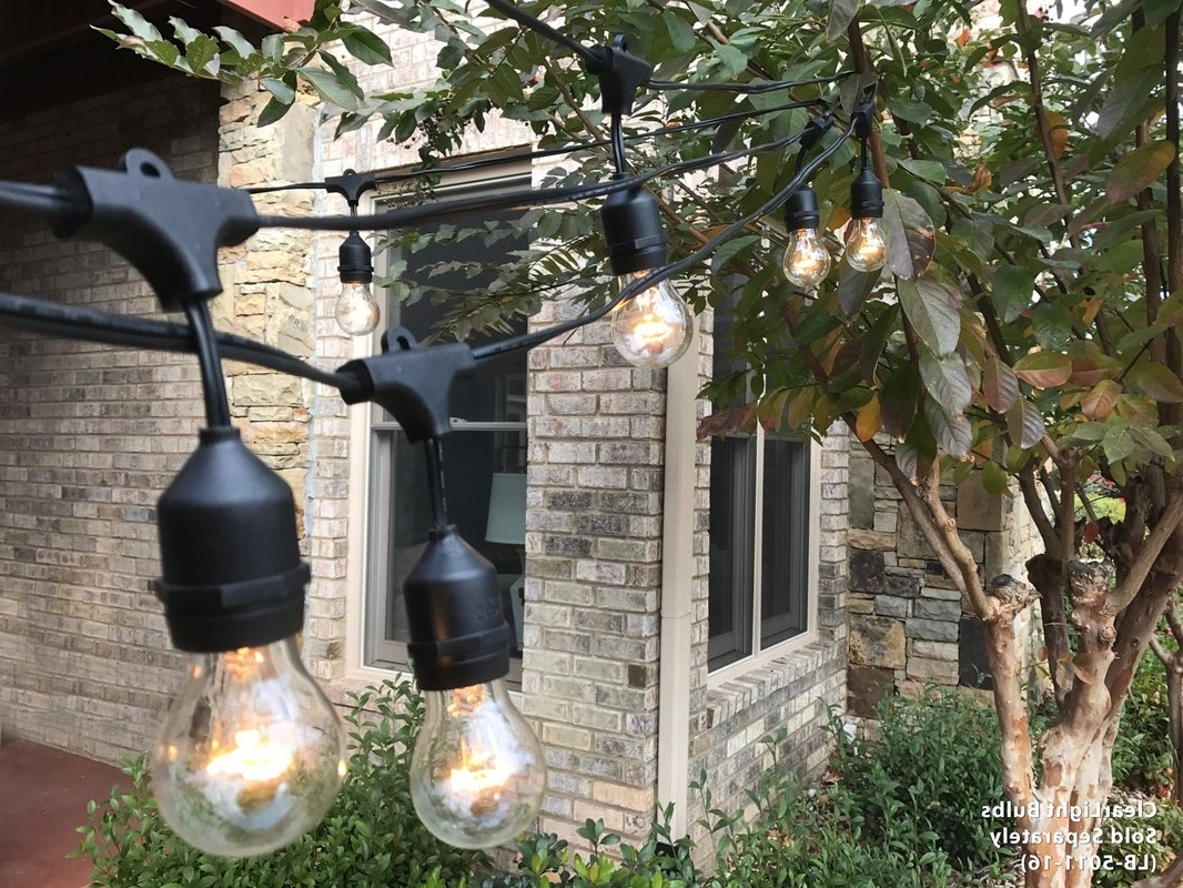 Royaldesigns Premium Weatherproof Indoor/outdoor 16 Light Globe Pertaining To 2018 Outdoor And Garden String Lights At Wayfair (Gallery 8 of 20)