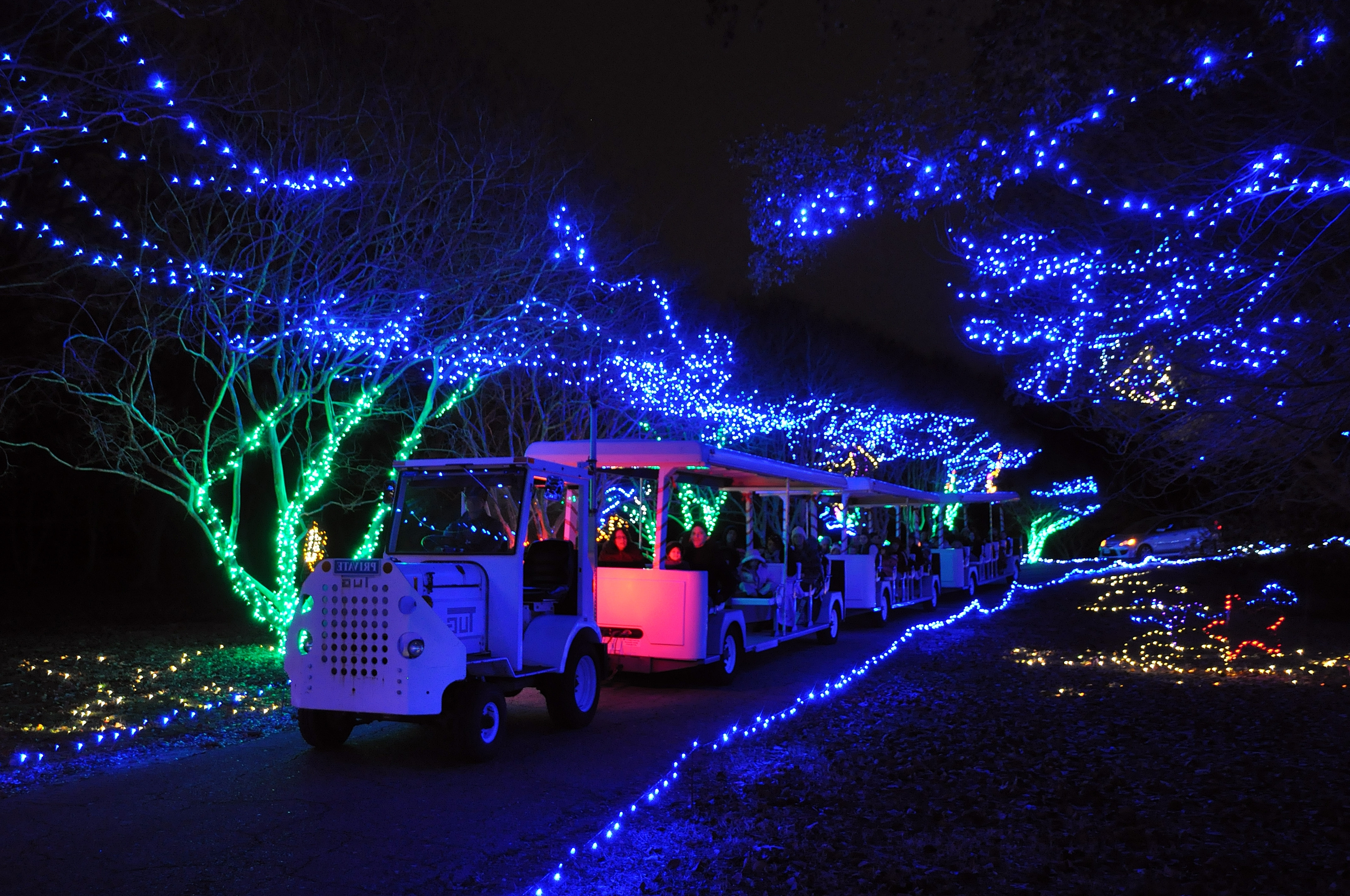 Widely Used Nbg Express Tram Ride Only – 5:30Pm Session 1  Sold Out – Norfolk With Regard To Botanical Garden Lights (View 19 of 20)