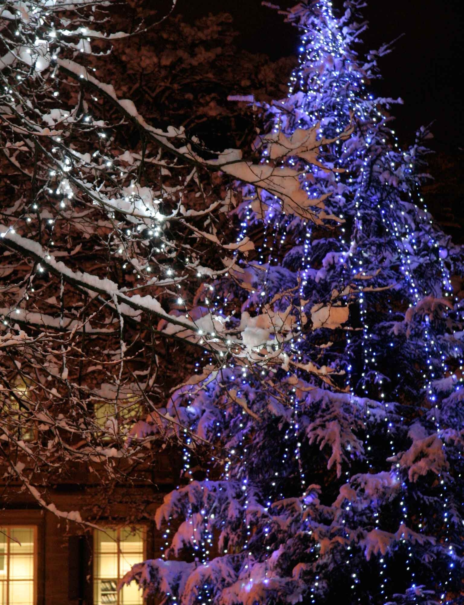 Christmas Light Ideas (View 18 of 20)