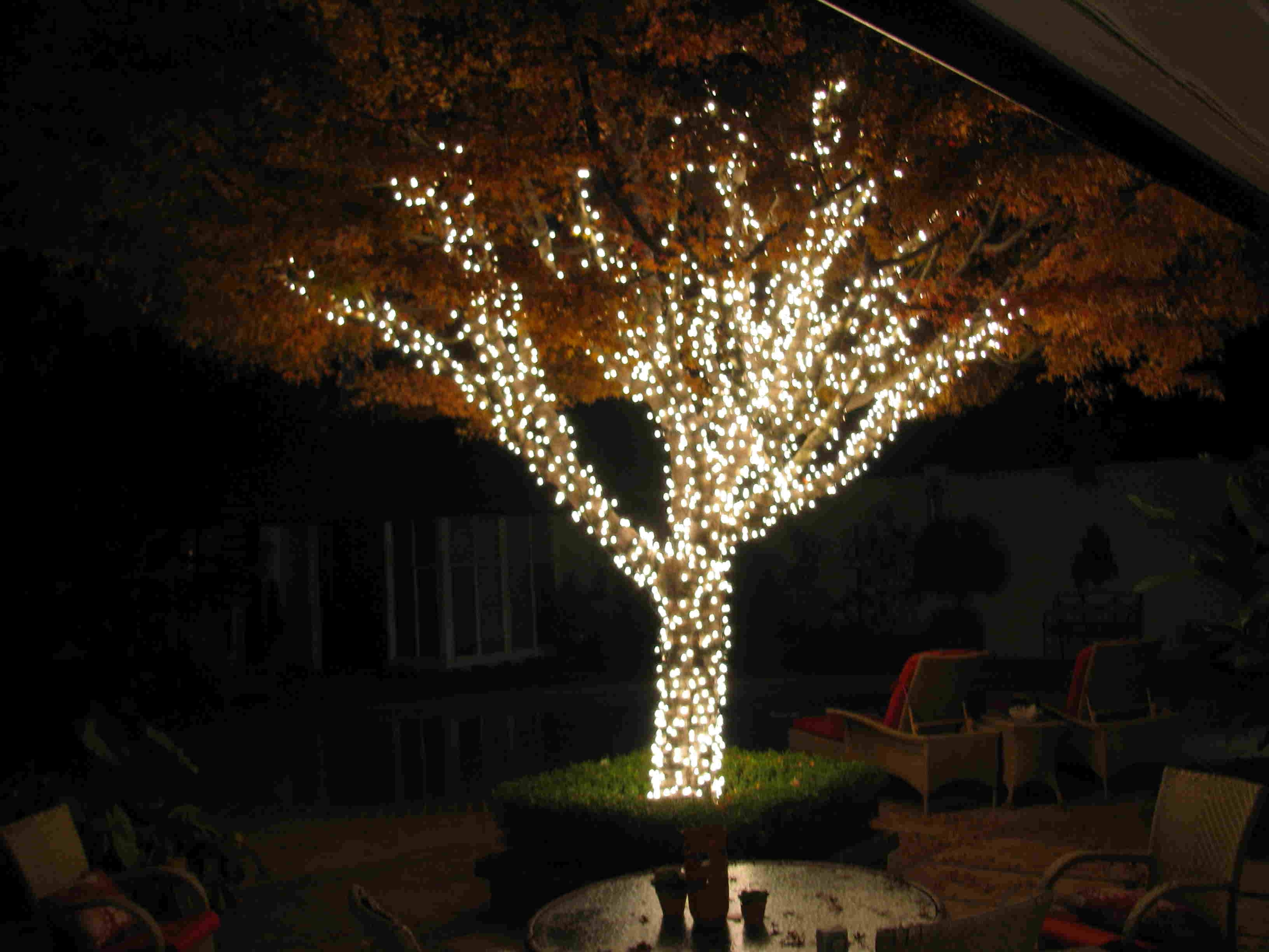 Outdoor Solar Decorations String Lighting On Palm Trees In Pertaining To Most Recently Released Outdoor Lanterns For Trees (View 5 of 20)