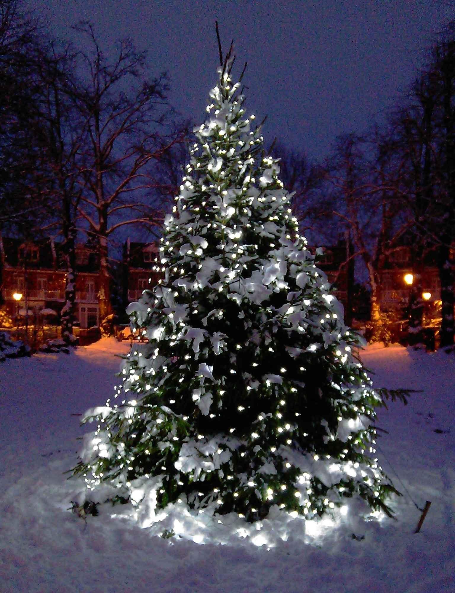 Outdoor Xmas Lanterns Regarding Most Popular Christmas Tree Light Ideas (View 6 of 20)