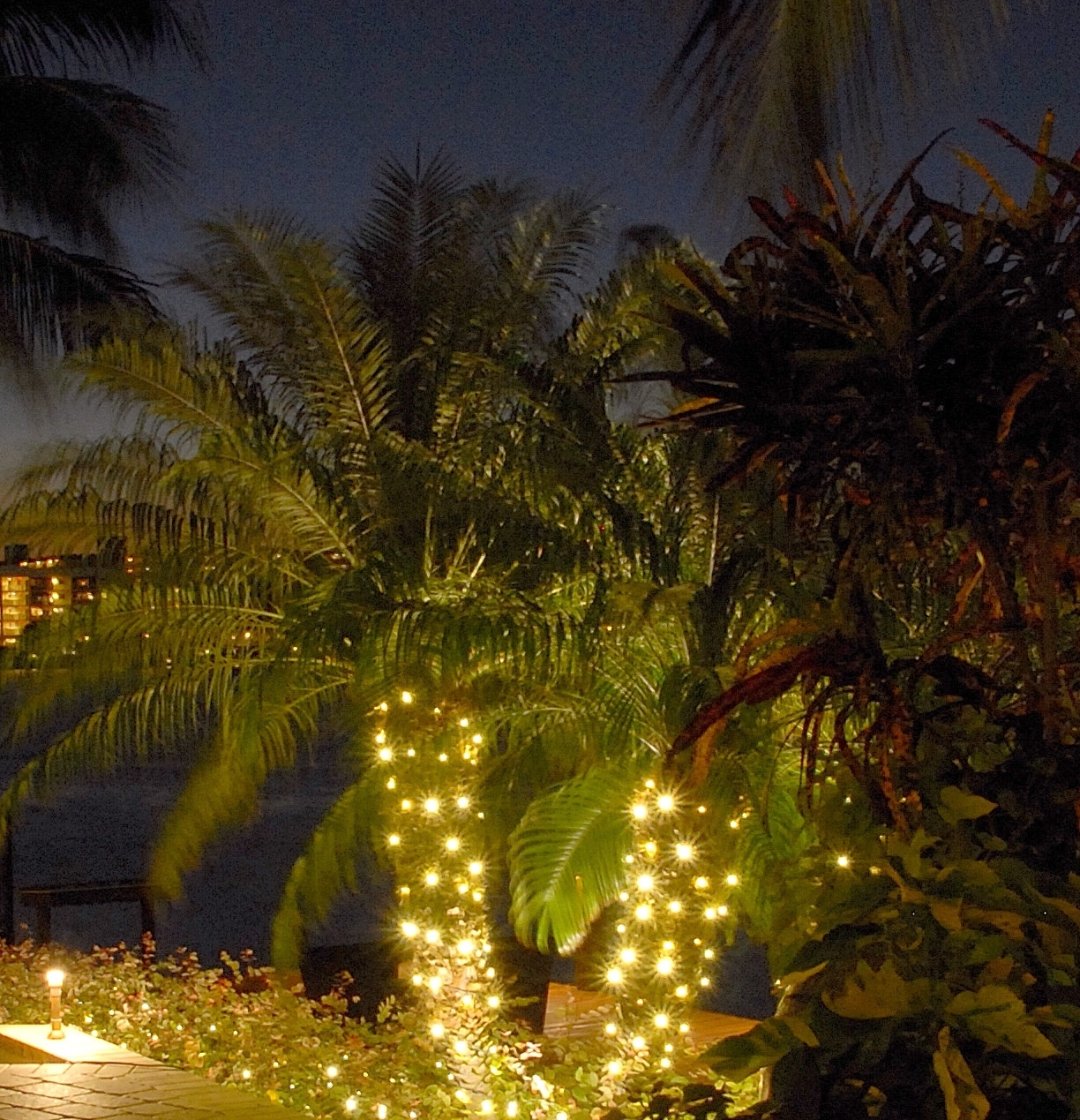 String Up Some Class – String Lighting For Your Wilmington Palm In Popular Outdoor Lanterns For Trees (View 15 of 20)