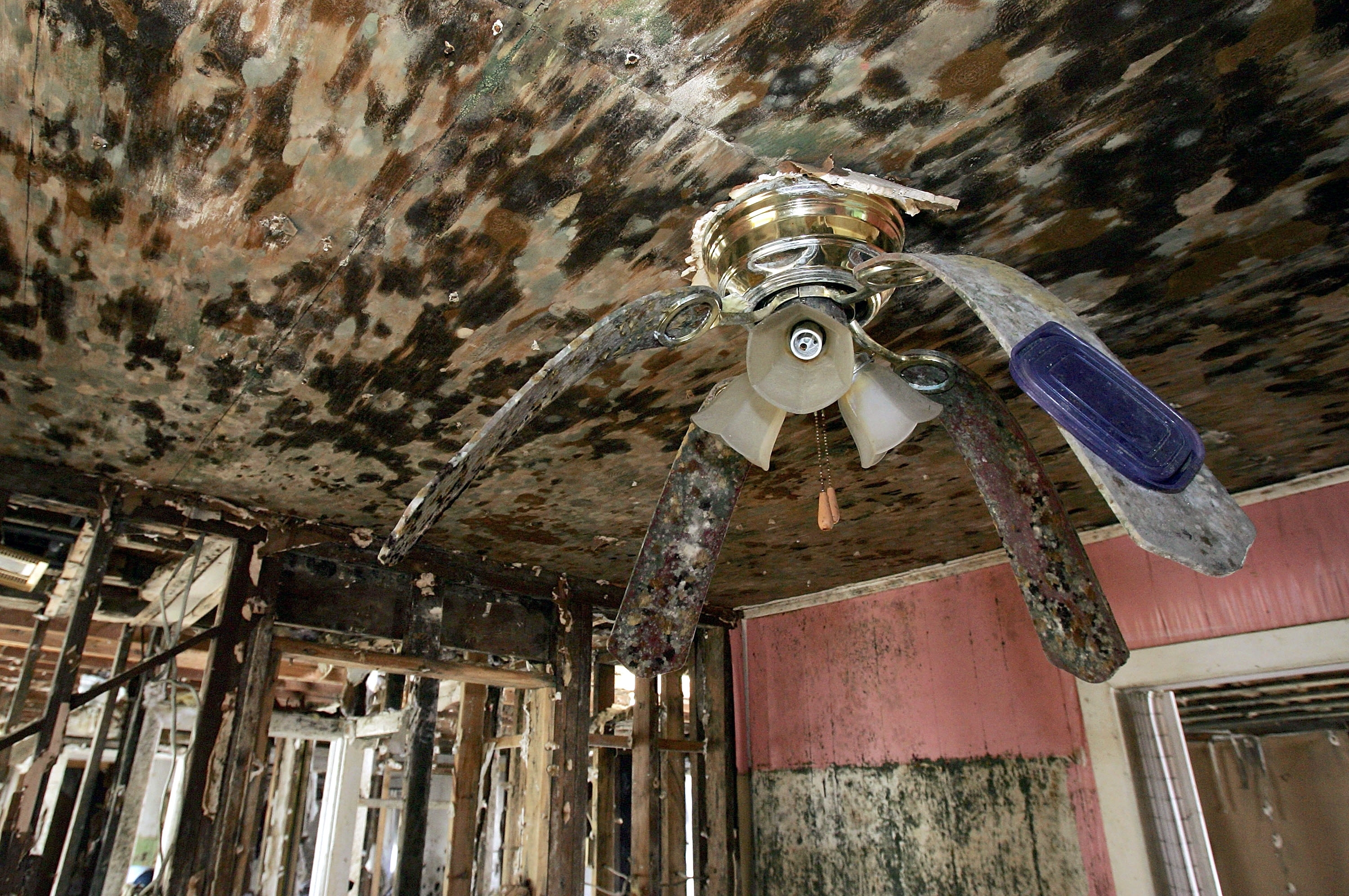 Most Recent Beyond Bleach: Mold Is A Long Term Problem After Flood And Disasters Regarding Hurricane Outdoor Ceiling Fans (View 11 of 20)
