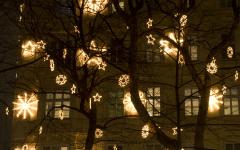 Hanging Lights In Outdoor Trees