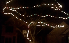 Hanging Lights on Large Outdoor Tree